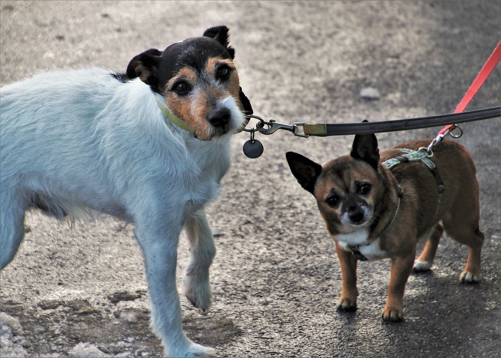 Postroj pre psa, ktorý sa mu bude páčiť