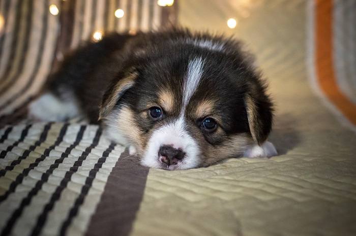 Ortopedický matrac pre psa